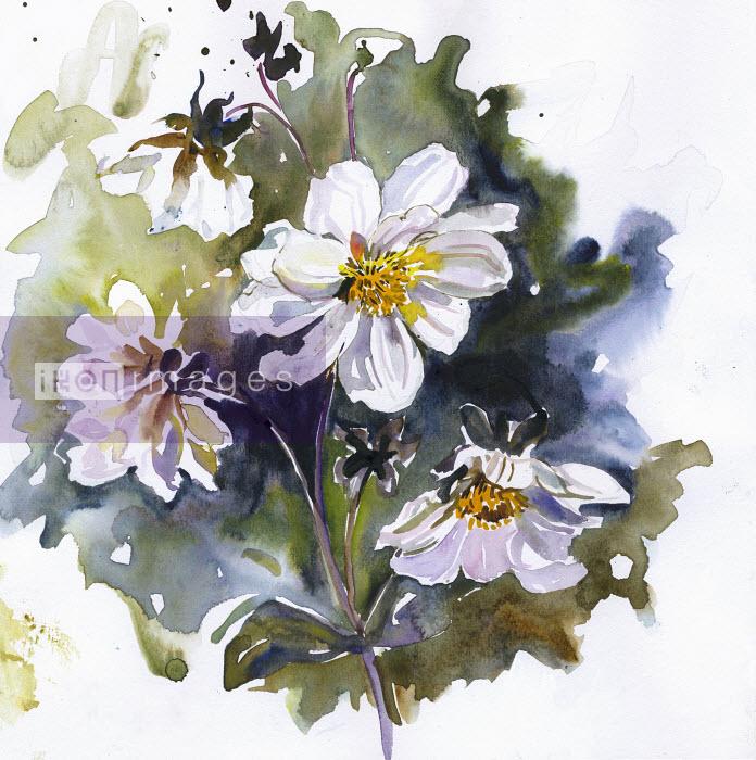 White dahlia flowers on stem - White dahlia flowers on stem - Rosie Sanders