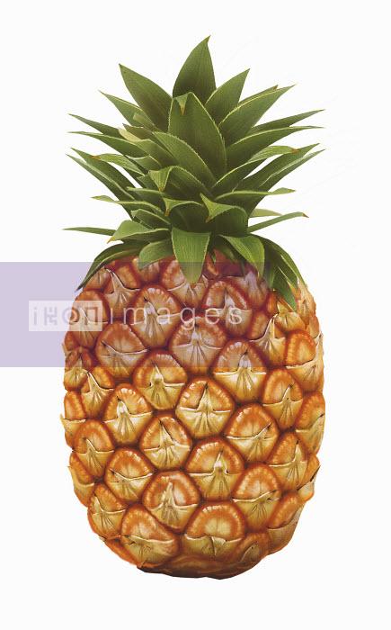Single whole pineapple - Single whole pineapple - Syd Brak