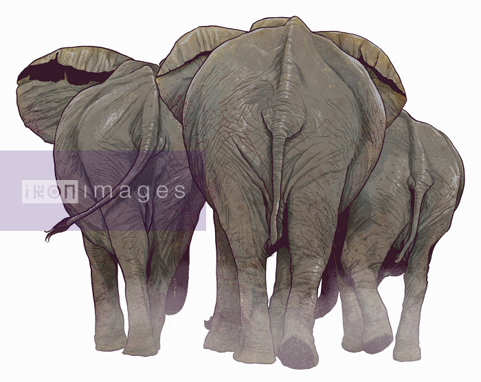 Rear view of elephants walking away - Rear view of elephants walking away - Mart Klein