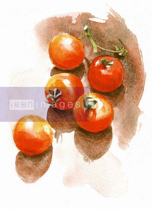 Watercolor painting of fresh tomatoes - Watercolor painting of fresh tomatoes - Philip Bannister