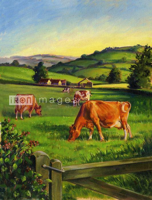 Cows grazing in field - Cows grazing in field - Ruth Palmer