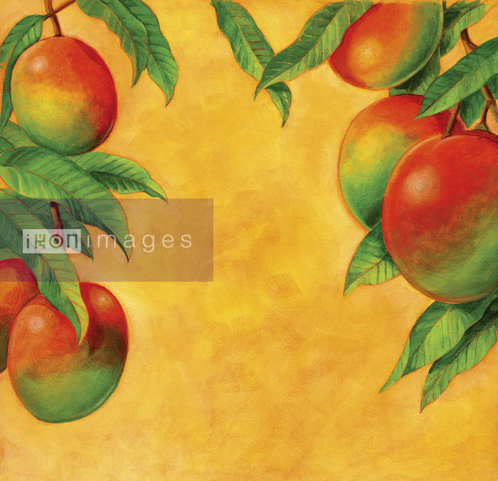 Ripe mangoes growing on branch - Ripe mangoes growing on branch - Ruth Palmer