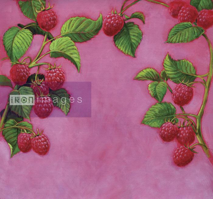 Ripe raspberries growing on branch - Ripe raspberries growing on branch - Ruth Palmer