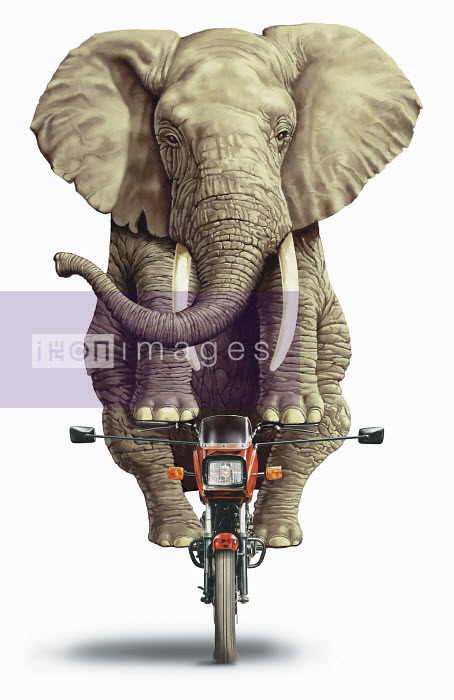 Elephant riding on a motorbike - Elephant riding on a motorbike - Steiner Lund