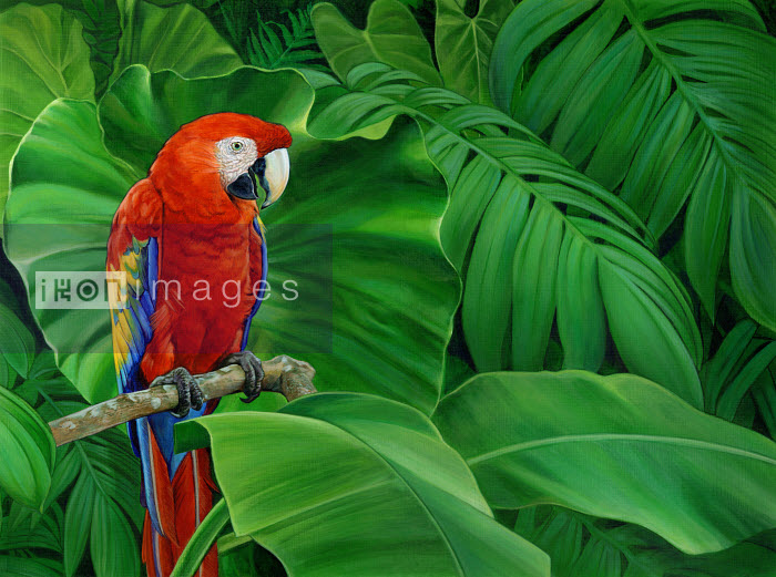 Scarlet macaw parrot perched on branch in lush leaves - Scarlet macaw parrot perched on branch in lush leaves - Sharif Tarabay