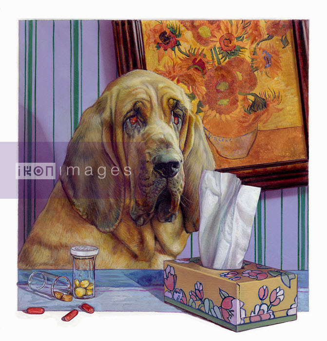 Pills and tissues next to bloodhound dog with a cold - Pills and tissues next to bloodhound dog with a cold - Sharif Tarabay