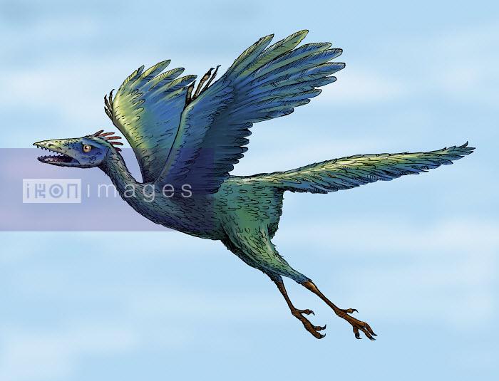 Archaeopteryx flying - Archaeopteryx flying - Sholto Walker