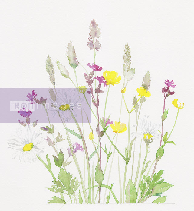Buttercups, red campion and grasses - Buttercups, red campion and grasses - Liz Pepperell