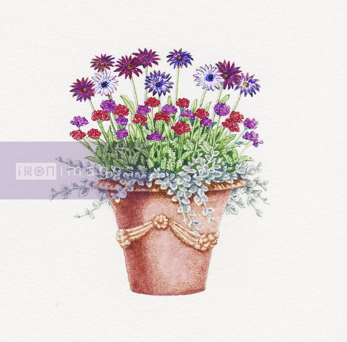 Ornate plant pot with Osteospermum, Verbena and Helichrysum - Ornate plant pot with Osteospermum, Verbena and Helichrysum - Liz Pepperell