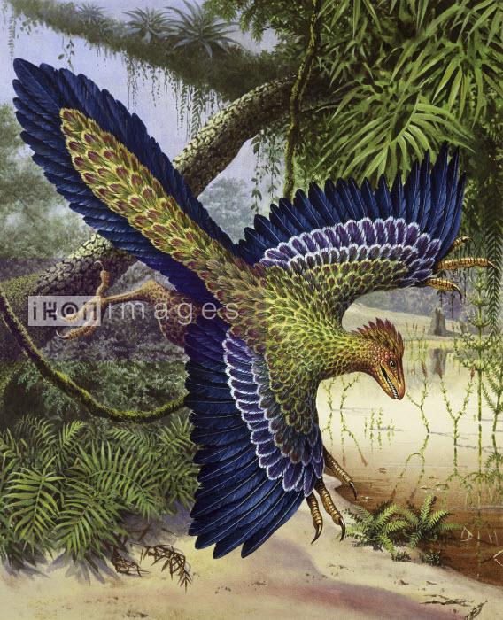 Archaeopteryx dinosaur flying - Archaeopteryx dinosaur flying - Pictorum