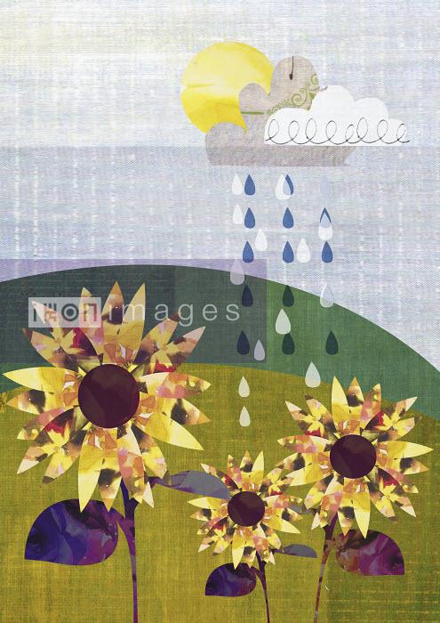 Raindrops falling on flowers growing in field - Raindrops falling on flowers growing in field - Sarah Jackson
