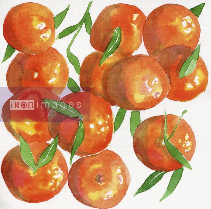 Watercolor painting of satsuma oranges - Hannah Clarke