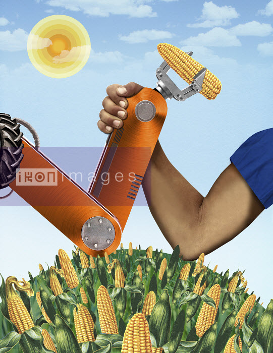 Valero Doval - Man arm wrestling with robotic claw holding corncob over maize field