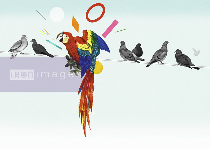 Valero Doval - Bright parrot standing out from the crowd of grey birds on power line
