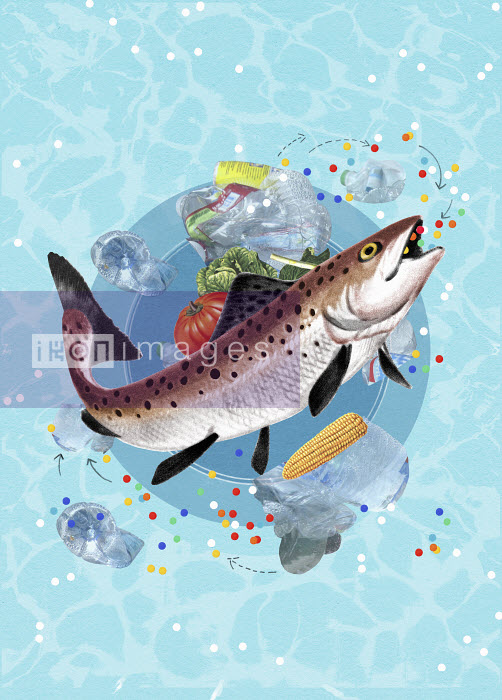 Valero Doval - Fish eating plastic pieces from the ocean above plate with vegetables