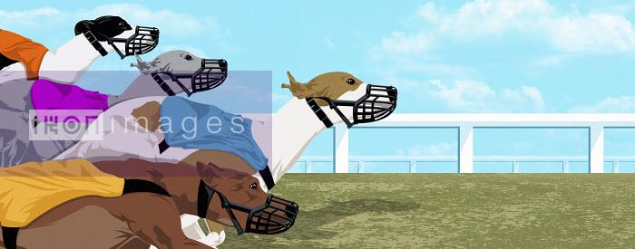 Dog race - Dog race - Taylor Callery