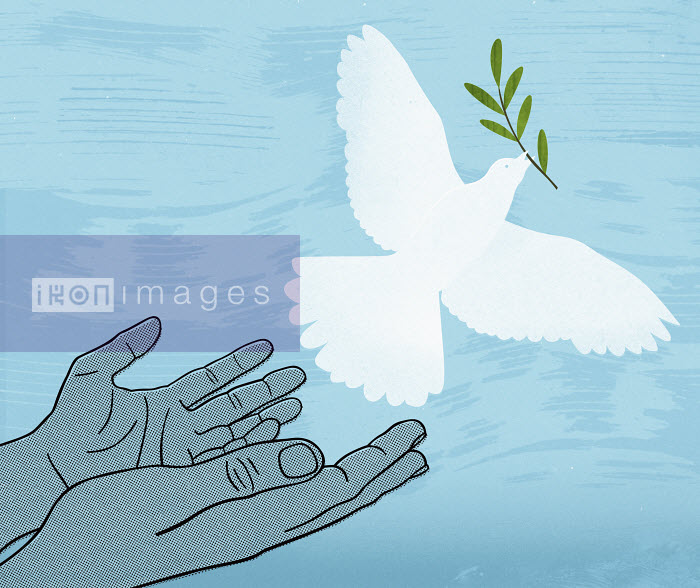 Hands releasing white dove with olive branch - Hands releasing white dove with olive branch - Mitch Blunt