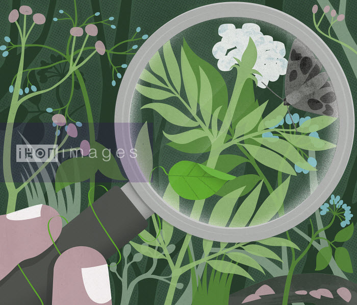 Plants and butterfly under magnifying glass - Plants and butterfly under magnifying glass - Mitch Blunt