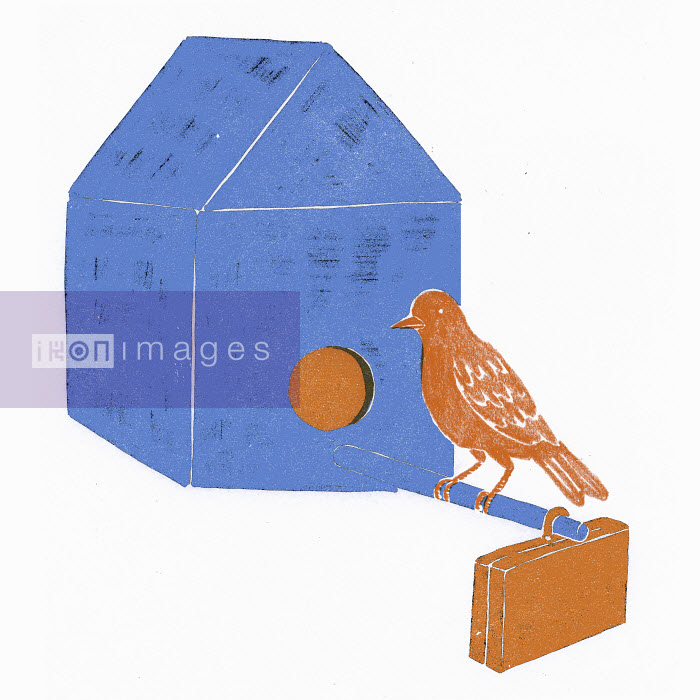 Bird with briefcase perching at nest box - Bird with briefcase perching at nest box - Sophie Casson