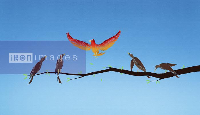 Vibrant bird flying above monochrome birds on branch - Vibrant bird flying above monochrome birds on branch - Nick Purser