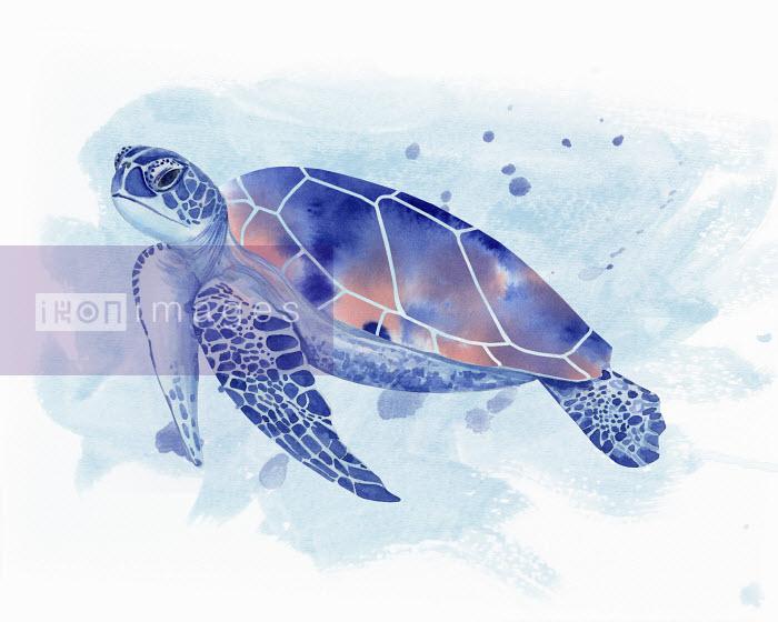 Watercolour painting of sea turtle Dena Cooper