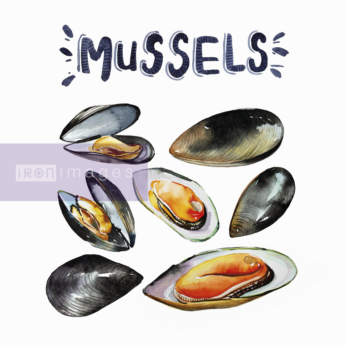 Enya Todd - Watercolour painting of fresh mussels