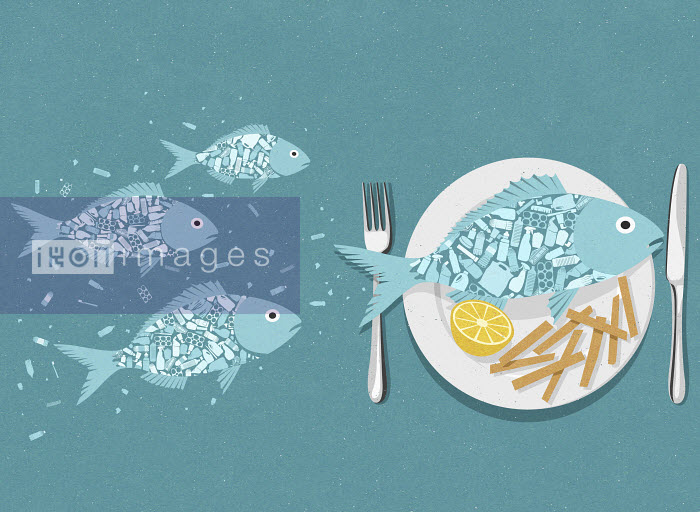 Fish full of plastic swimming and on plate with chips John Holcroft