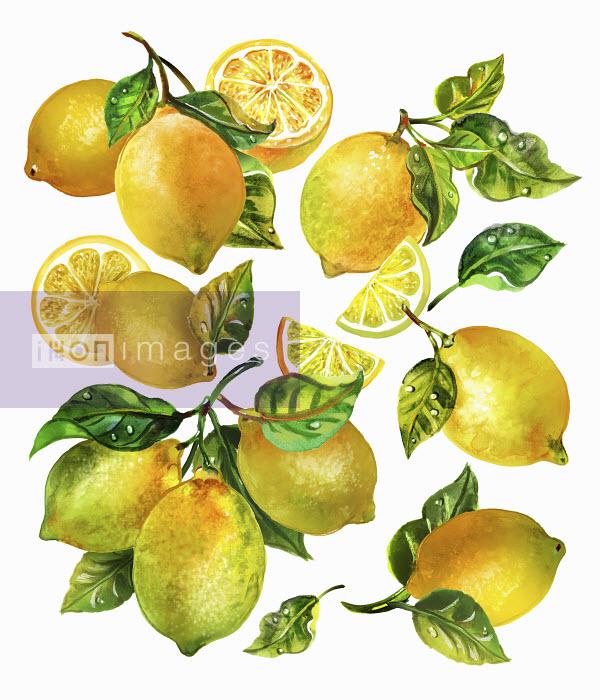 Sunny Gu - Fresh lemons with leaves and stalks