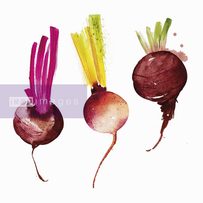 Enya Todd - Watercolour painting of different beetroot