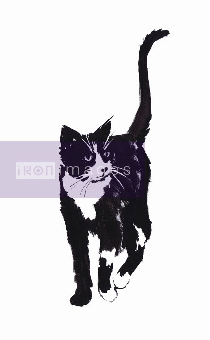 Jacqueline Bissett - Illustration of black and white cat