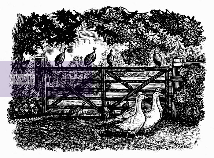 Black and white scraperboard engraving of geese and guinea fowl by garden gate
