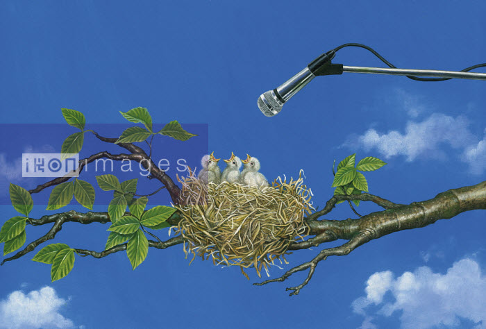 Microphone above baby birds in nest