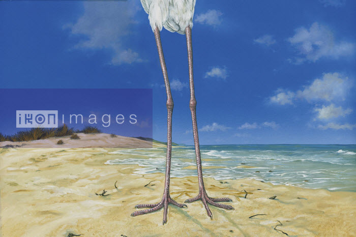 Close up on stork's legs on beach