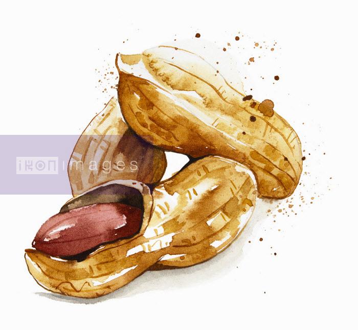 Close up of peanuts in their shell - Enya Todd