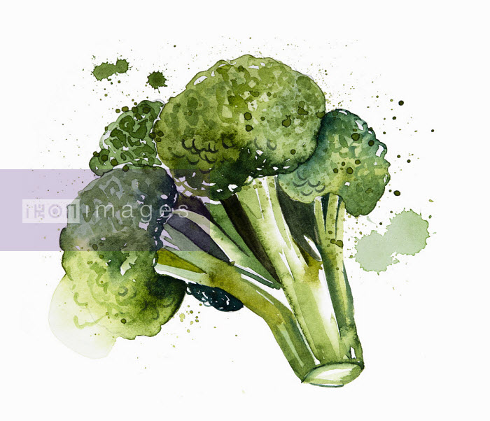 Enya Todd - Close up of head of broccoli