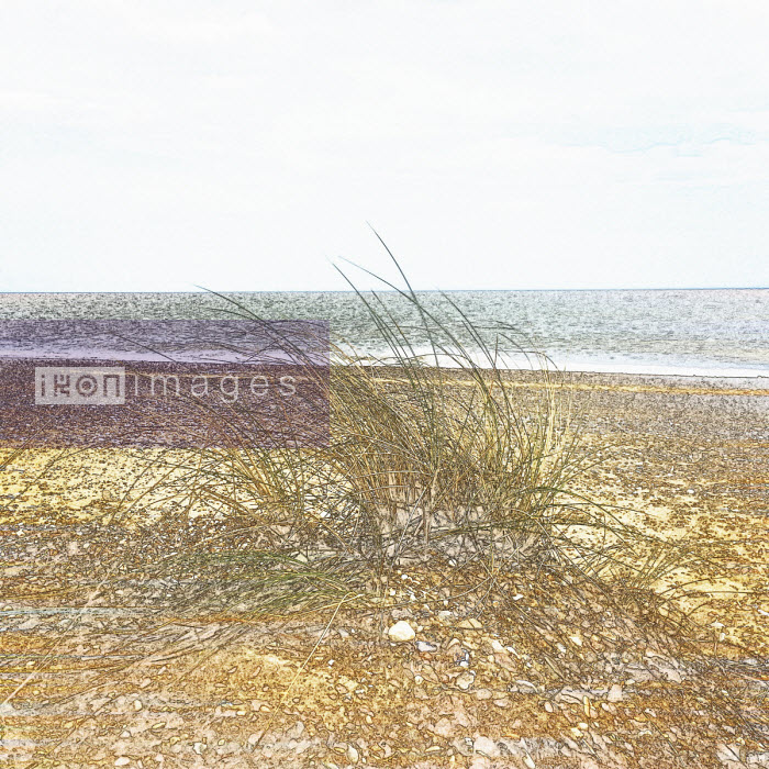 Marram grass growing on beach - Studio Parris Wakefield