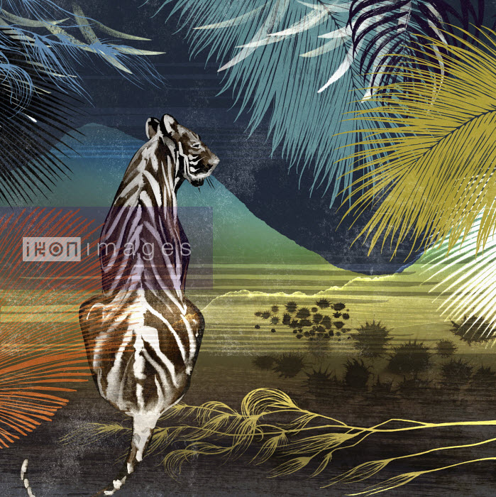 Tiger looking out at landscape under palm trees - Nick Purser