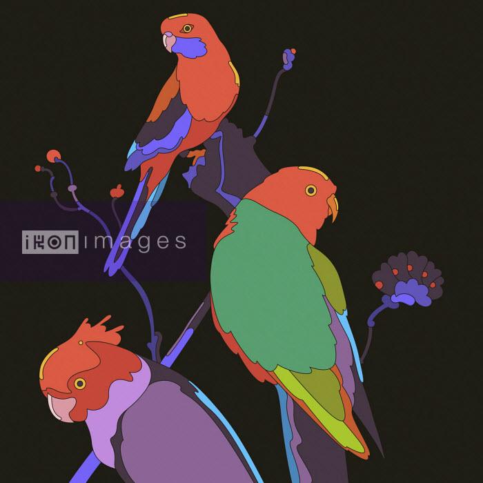 Matt Lyon - Three brightly coloured parrots