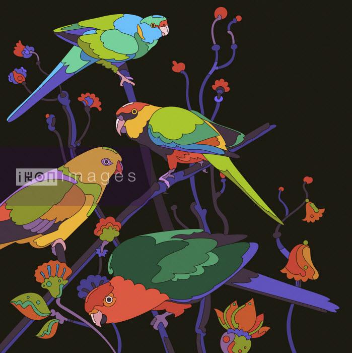 Matt Lyon - Four brightly coloured parrots