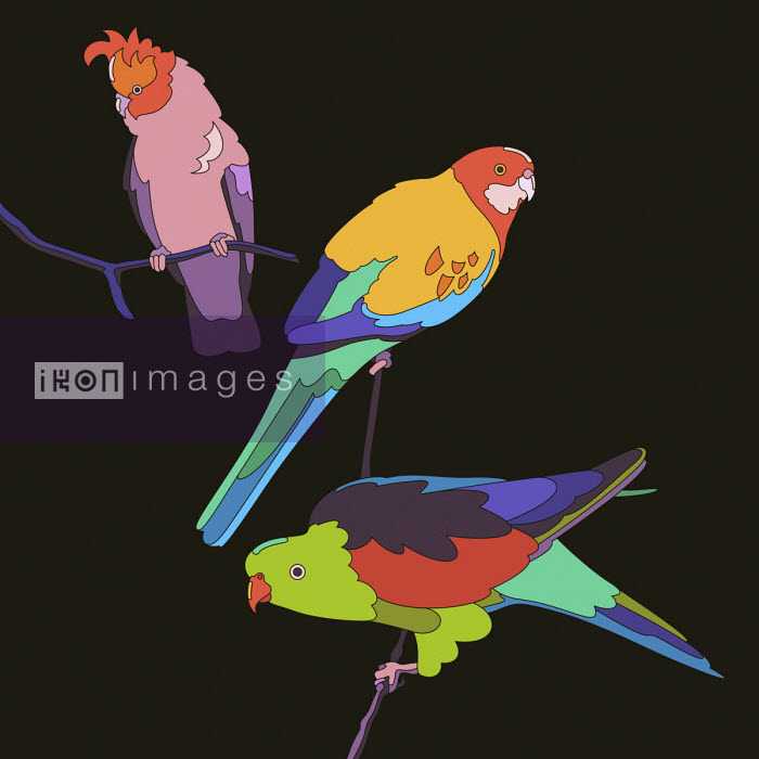 Matt Lyon - Three brightly coloured parrots