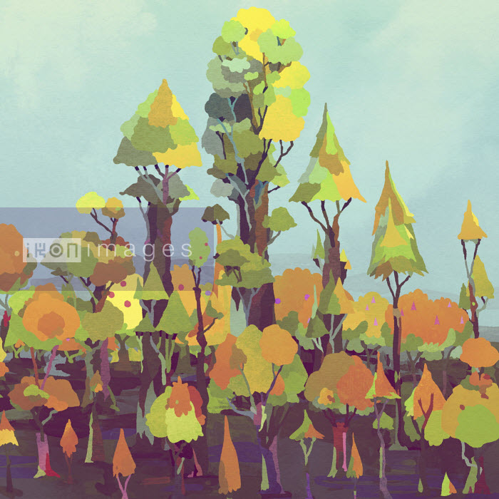 Matt Lyon - Treetops changing from summer to autumn