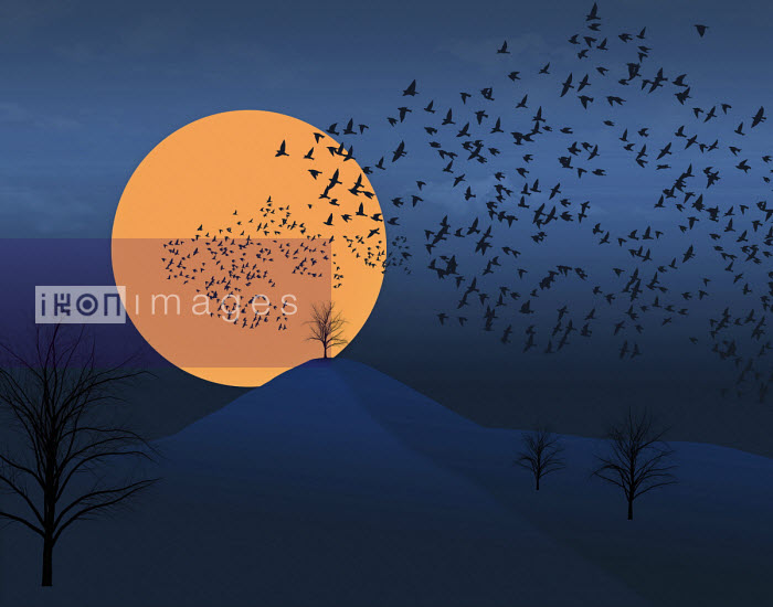 Flocks of birds are seen flying across the sky and a setting sun in this illustration about fall migration. - Flock of birds silhouetted in moonlight