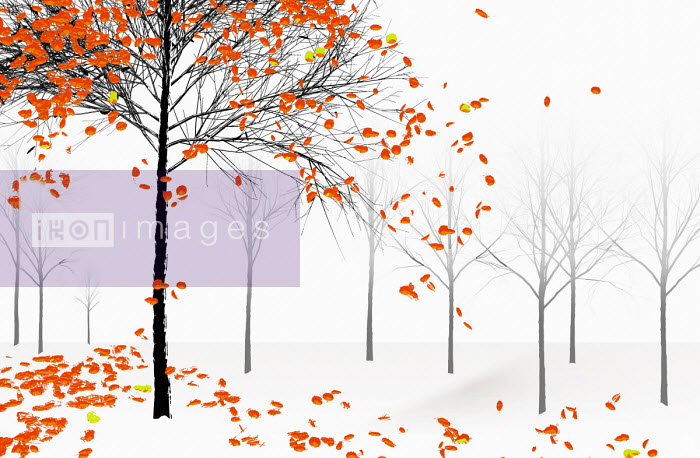 Bright orange autumn leaves falling from tree