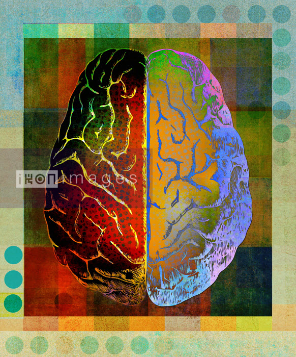 Roy Scott - Overhead view of brightly coloured right and left sides of brain