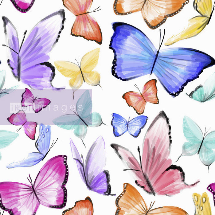 Lots of butterflies - Stephanie McKay