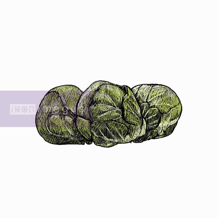 Illustration of brussels sprouts - Andrew Pinder