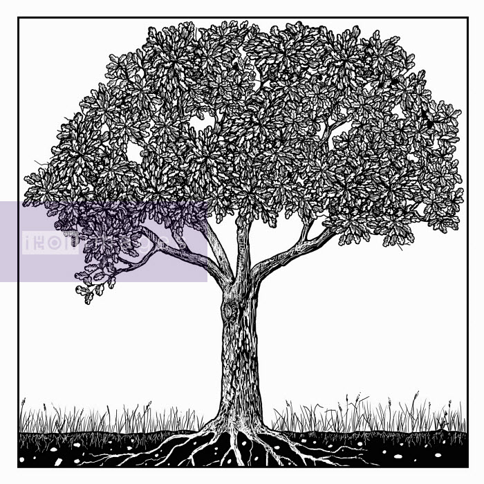 Black and white drawing of tree in summer - Andrew Pinder