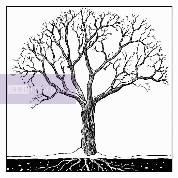 Black and white drawing of tree in winter - Andrew Pinder