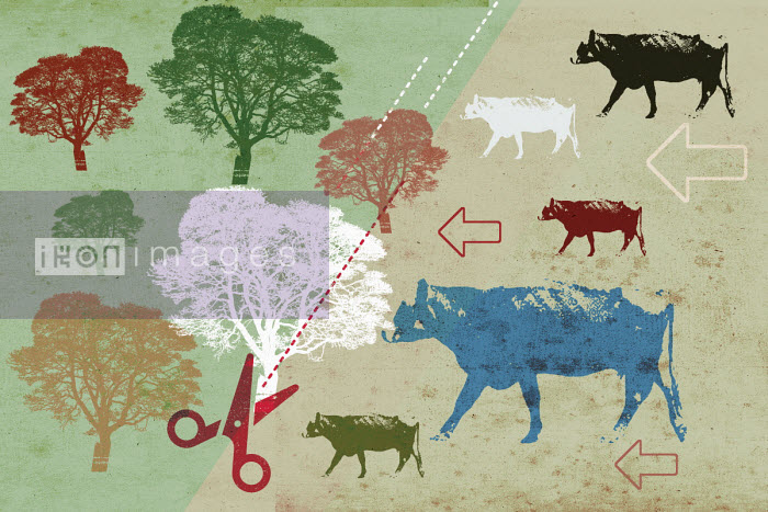 Dividing line between beef cattle and forest trees - Lee Woodgate