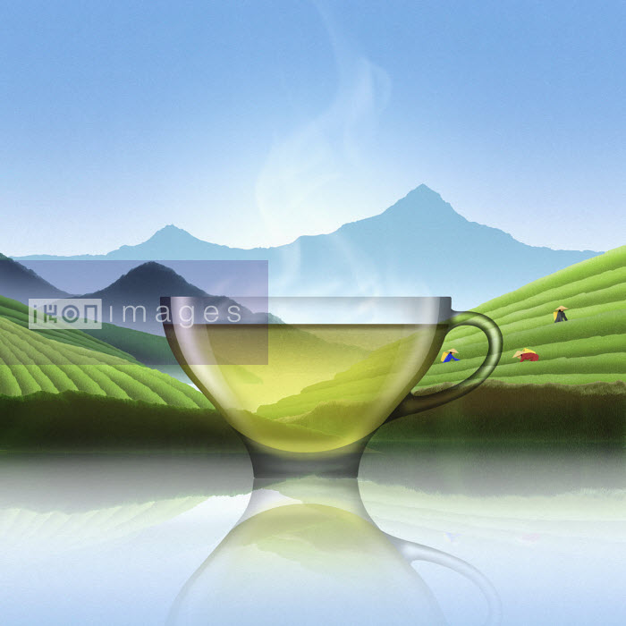Glass of Chinese green tea in tea plantation landscape - Nick Purser